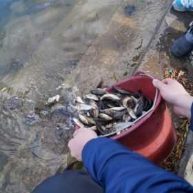 У водосховище на Хмельниччині запустять 11 тисяч мальків риби