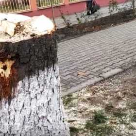 Дерева ріжуть, аби розширити вулицю.