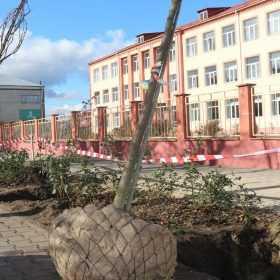 У центрі Старокостянтинова планують висадити сотню сакур.
