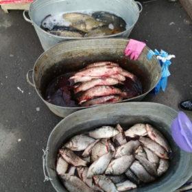 Браконьєри спустошують водойми Хмельниччини: невтішна статистика