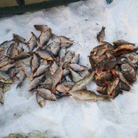 Рибпатрульні на Хмельниччині вилучили майже 100 кг незаконно добутої риби