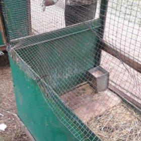 У Хмельницькому невідомі вбили тварин у зоокутку