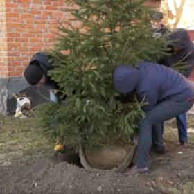 Біля міськради у Хмельницькому висадили екологічну ялинку
