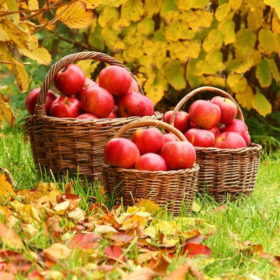 яблука, кошики