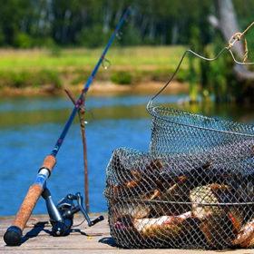 рыбалка, рыба, сетка