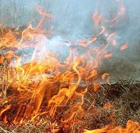 На Хмельниччині знову палять траву