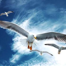 Якщо ж у цей день прилітають чайки, то можна чекати тепла.