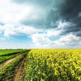 Лише громади мають вирішувати, що робити з землею — продавати, чи здавати в оренду.