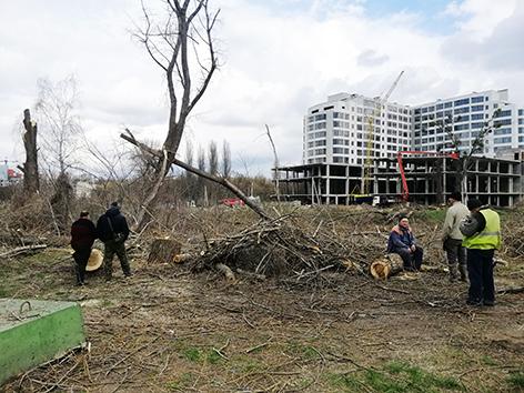 Зрізані дерева у Хмельницькому