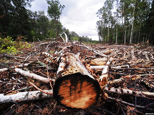 знищений ліс
