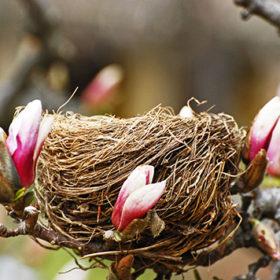 Птахи гніздяться на теплій стороні – до холодного літа