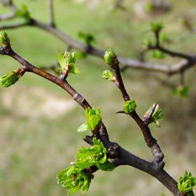 Прогноз на 13 квітня: птахи раптово замовкли – до грози