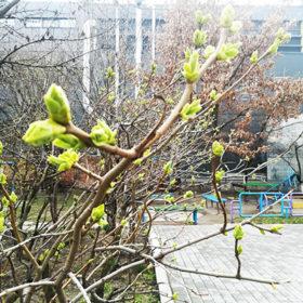 На Хмельниччині 15 квітня дощитиме