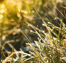 заморозки на траві