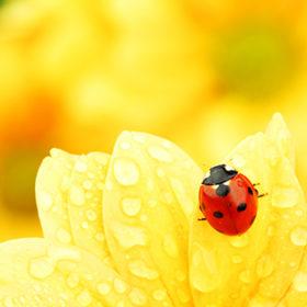 сонечко на квітці