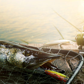 Summer Fishing background. Fishing lure and trophy Pike