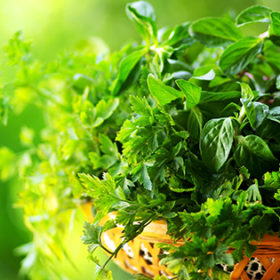 Cooking herbs of portuguese cuisine.