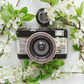 camera in white spring blossoms of a blossoming tree