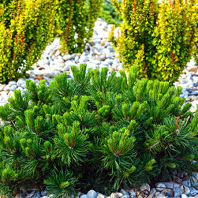 Various bushes on flowerbed in spring park.