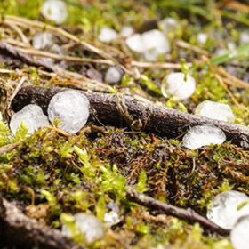 hail lies on the forest floor, ice round Hail, close up