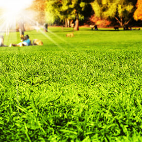 Park scene with detail grass in foreground and blurred people enjoying nature in the background with sun flare rays breaking through
