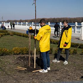 Нові дерева у Хмельницькому
