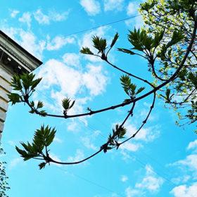 блакитне небо з гілками