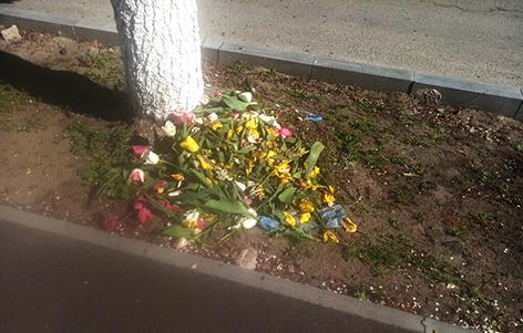 зіпсовані тюльпани