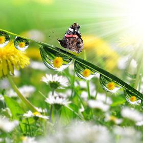 роса и бабочка