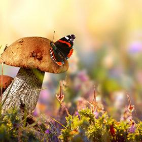 wild cepe mushrooms, flowers and grass closeup, horizontal macro photo