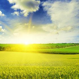Beautiful sunset on wheat field and blue sky
