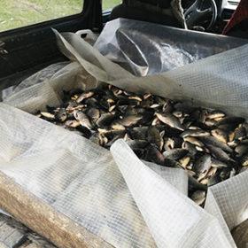 незаконна риба в авто