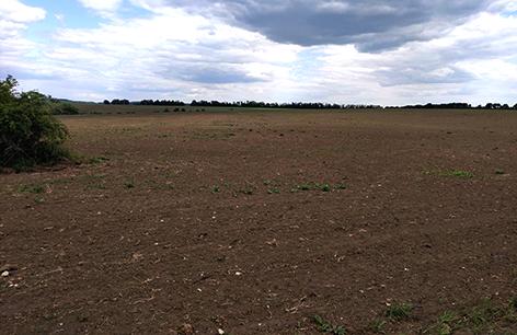поле під кукурудзу