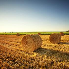 сено в поле