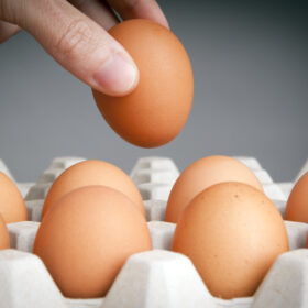 Person choosing the best egg from a carton of eggs