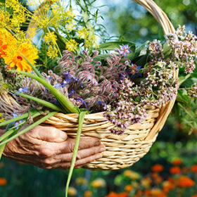 Human hands showing a basket with fresh organic herbs