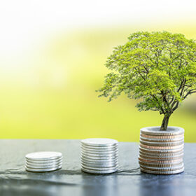 Growth plant on coin money. Finance and business concept.
