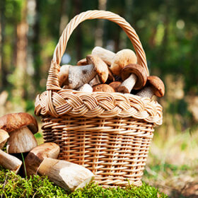 basket with mushrooms (ceps) on moss in forest