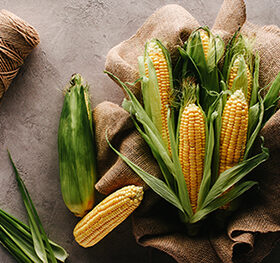 кукуруза на холсте