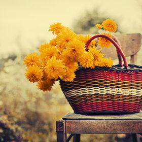 корзина с цветами на стуле в поле