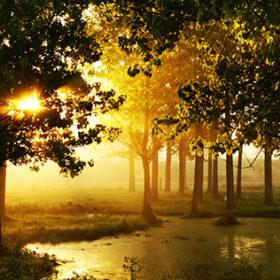 Morning in wood near a bog