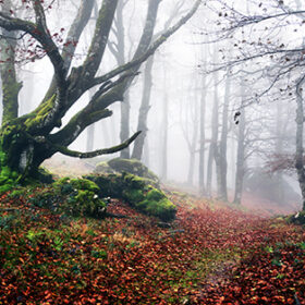 path to mysterious and foggy forest. Urbasa, Navarre, Spain.