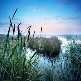 view on misty swamp at sunrise, Drenthe, Netherlands