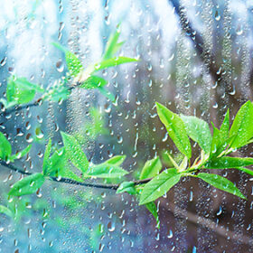 spring rain in the forest, fresh branches of a bud and young leaves with raindrops