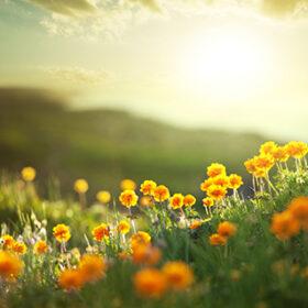 meadow at morning