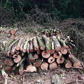 незаконно зрубаний ліс