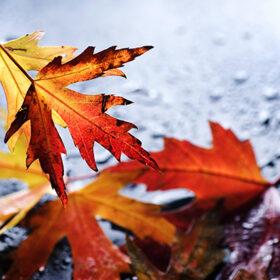 желтые листья на земле