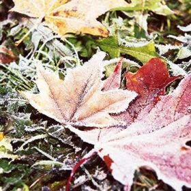 заморозки на траве