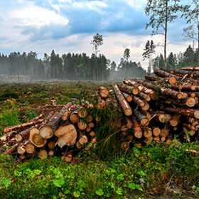 pile of logs near a cutting area in Filipstad Varmland Sweden 2019