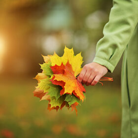 Female hand with colorful bouquet of autumn leaves. Closeup.